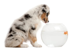 puppy looking into a fish bowl