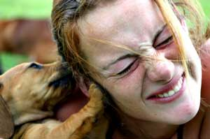 How To Survive Puppy Teething And Nipping Karen Pryor Clicker Training