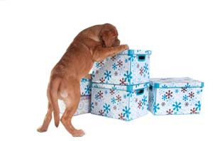 dog sniffing around some boxes