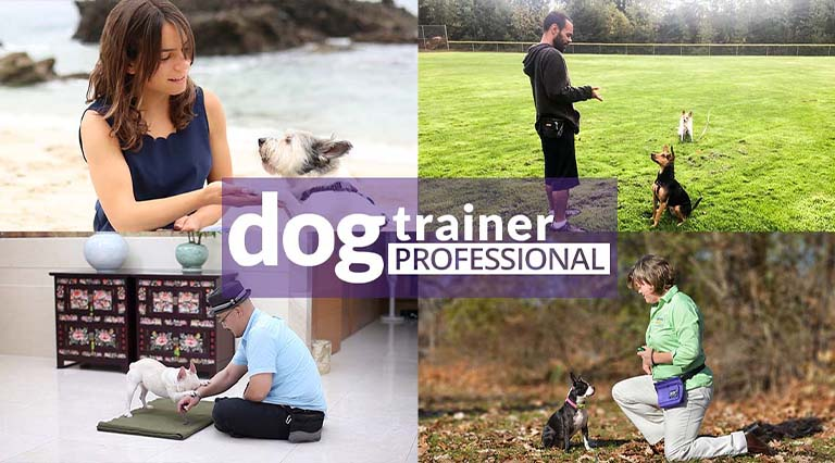 Dog Trainer Professional Scholarship Opportunities