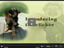 Basics of Clicker Training Puppies