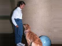 Ben: An Aggressive Dog Case Study