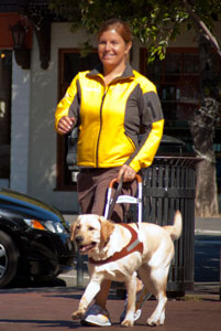 Clicker trained guide dog