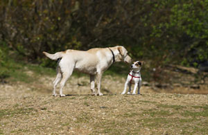 Don't Socialize the Dog!