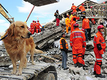 Ignorance is Bliss: Real-World Use of Modifiers with a Search & Rescue Dog
