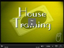 An Introduction to House-Training a Puppy