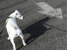 How to Teach Your Dog Left and Right