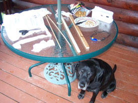 How to Clicker Train Your Dog to Stay in the Yard | Karen Pryor