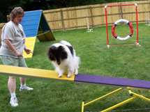 Teach Your Dog to Enjoy Movement Underfoot