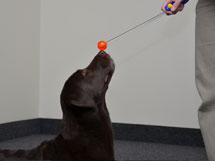Target Training