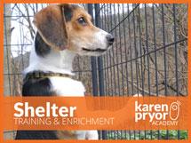 Shelter Training & Enrichment Course