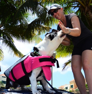 sup pup teach your dog to ride a standup paddleboard