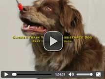 Clicker Train Your Own Assistance Dog