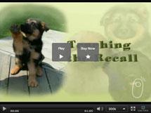 Teaching the Puppy Recall