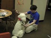 Therapy Dog Training: Becoming a Therapeutic Team