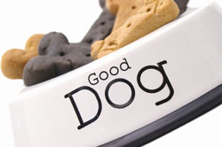 good dog food dish