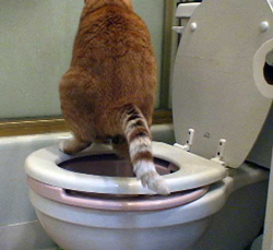 Cat pooping all through EVERYTHING - Pet Forums Community