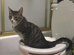Potty train kitty toilet seat