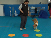 "Sabine Winkler with her dog Jamie, working at ""going over targets arranged at a right angle"""