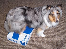 dog on box
