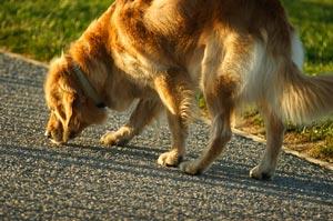 How Do U Train A Dog With A Clicker