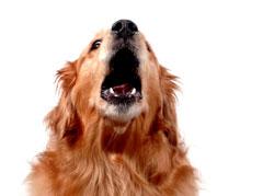 How to Stop Unwanted Barking | Karen Pryor Clicker Training