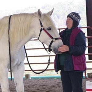 clicker training for your horse karen pryor clicker books