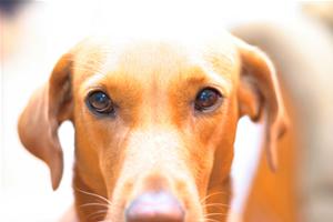 An alert dog