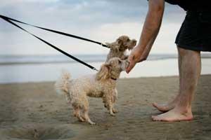 How To Teach Your Puppy Not To Jump Karen Pryor Clicker