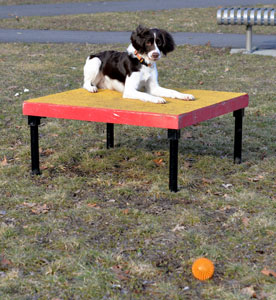 Click and treat your dog for staying on the table while you attempt to distract her.