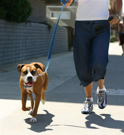 Loose-leash walking
