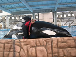 A Trainer and whale hug at Seaworld