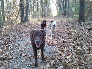 My Dog is Aging—Now What? More Training, Of Course! | Karen Pryor