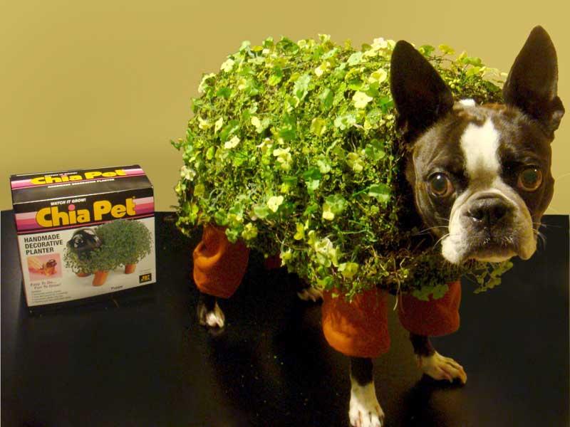 chia pet costume - Pet Halloween Photo Contest