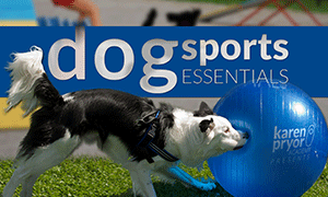 Dog Sports Essentials Course